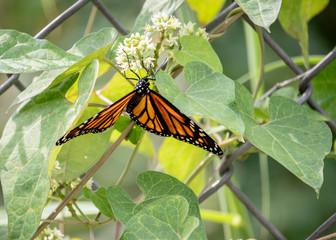 Pretty Butterfly Upside Down
