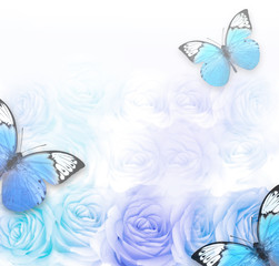 Beautiful roses as background and butterfly. Floral background