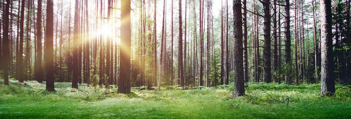 Forest nature sunrise morning