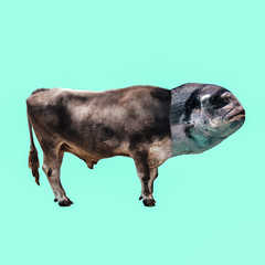 Contemporary art minimal collage. Bull Fish metamorphosis