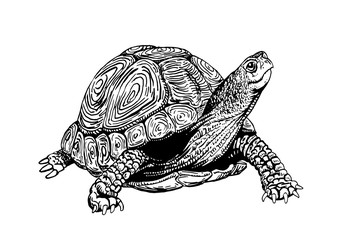 Graphical tortoise isolated on white background,vector sketchy illustration