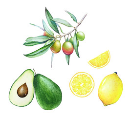 Collection of watercolor hand drawn olive tree branch, avocado and lemon isolated on white background.
