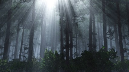Trees in the fog. Forest in the morning in the fog.