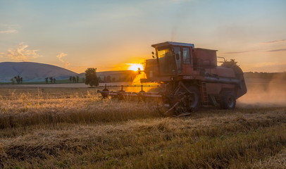 Harvest. The combine harvester removes wheat at sunset. The wheat ripened.