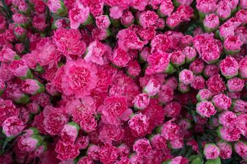 Full frame pink Carnation Flowers in Dounan Flower Market