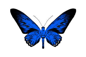 Silhouette of a blue butterfly isolated on white background.