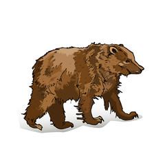 Brown bear on a white backgroun