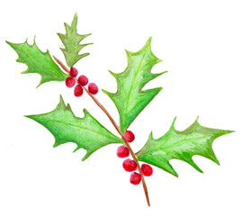 Watercolor holly with berries