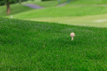 Gold ball or Mashroom on golf couse