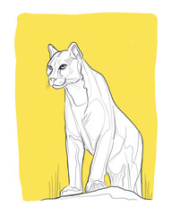 Wild puma digital vector illustration