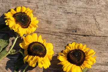 Decorative sunflowers on the wooden background
