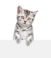 Tabby kitten above white banner. isolated on white background