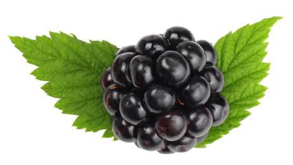 Blackberries isolated on white. Macro