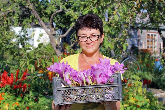 Женщина держит в руках пластиковый ящик с расцветшими безвременниками