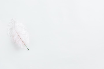 White feather flower on white background, top view and flat lay.