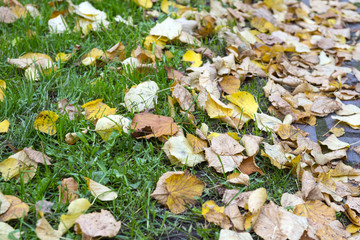 yellow fallen leaves on green grass on the lawn