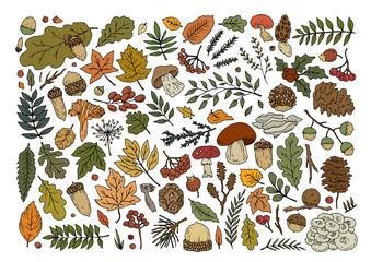 autumn forest elements 3