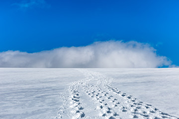 Trail of footsteps leading to the top of the Svalbard mountain
