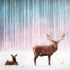 Fototapete - Couple of noble deer in a snowy winter forest. Winter Christmas fantasy image.