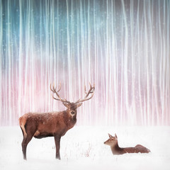 Wall Mural - Couple of noble deer in a snowy winter forest. Christmas fantasy image.