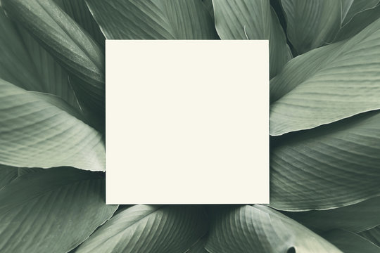 Paper mock up white card on a green Galingale leaves. Creative layout with nature concept.