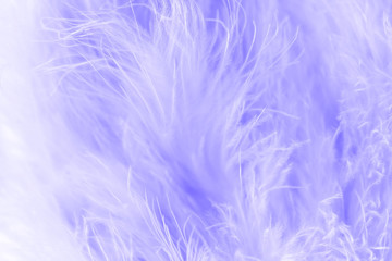 Macro shot of purple bird fluffy feathers in soft and blur style