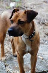 Beautiful crossbreed dog