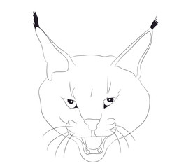 portrait of a lynx drawing lines, vector