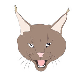 portrait of a lynx drawing, vector,