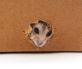 White hamster and hole.