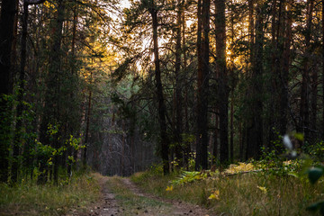 gravel pathway in autumn pine forest during sunset