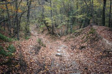 Дорога в осеннем лесу