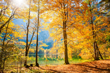 Autumn trees on the shore of lake in Austrian Alps.