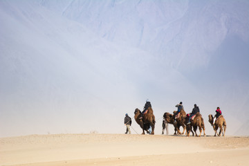Tourists on camel in sand dunes Nubra Valley, Ladakh, India,This is the famous camel riding activities for tourists