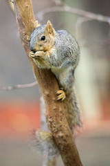 Squirrel sitting on tree branch and eating