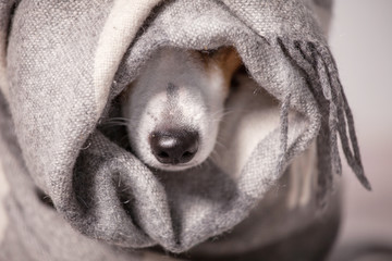 Dog under a plaid