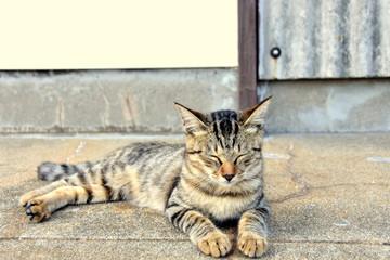 相島の笑顔の野良猫