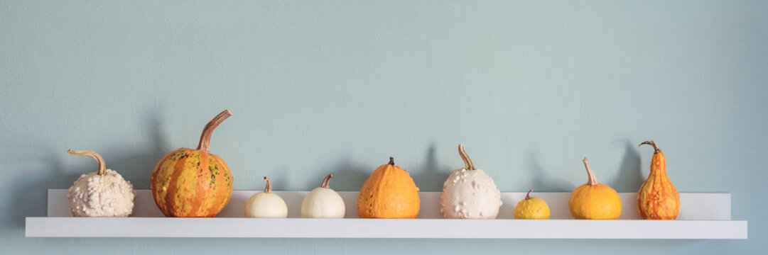 Happy Thanksgiving Background. Selection of various pumpkins on white shelf against pastel turquoise colored wall. Modern seasonal room decoration. Pumpkins banner.