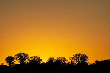 sunset tree africa warm silouette