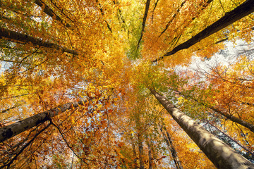 Beautiful autumn colors of nature. Season concept.