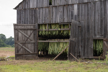 Tobacco drying barn in New England