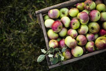 Apfelernte auf dem Land