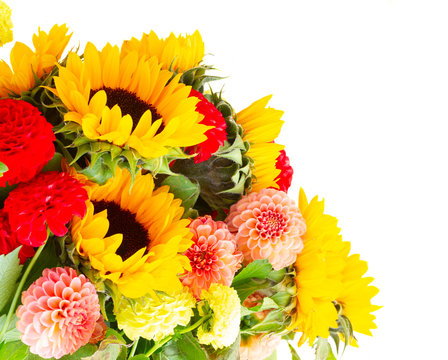 Dahlia and sunflowers fresh flowers isolated on white background