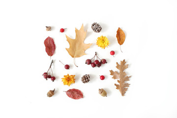 Autumn styled botanical arrangement. Composition of acorns, pine cones, colorful dried oak leaves, little apples and chrysanthemum flowers on white table background. Fall decorative concept, flat lay.