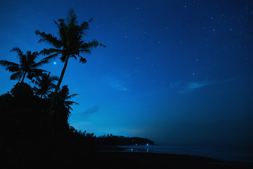 Scenic night sky with a lot of stars and palm tree