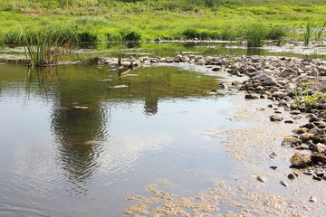 Stone dam - shallow water on a small river in the summer against the green banks