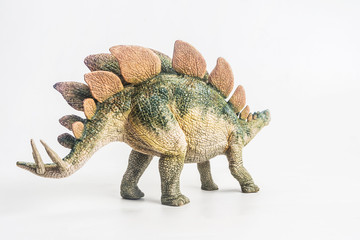 dinosaur , Stegosaurus  on white background