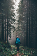 Spazieren im Wald, Waldweg im Tannenwald dunkelgrün, Nationalpark Harz,