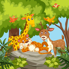 Happy animals in jungle