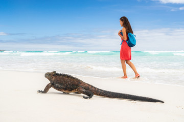 Galapagos wildlife marine iguana walking on Tortuga Bay beach in Santa Cruz island with tourist woman in background. Galapagos islands travel vacation.